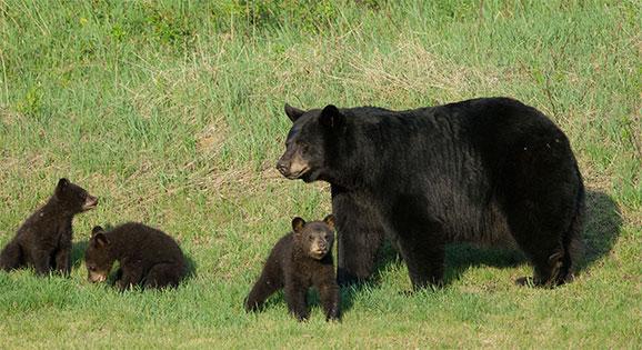 Cubs Corner 4 Kids