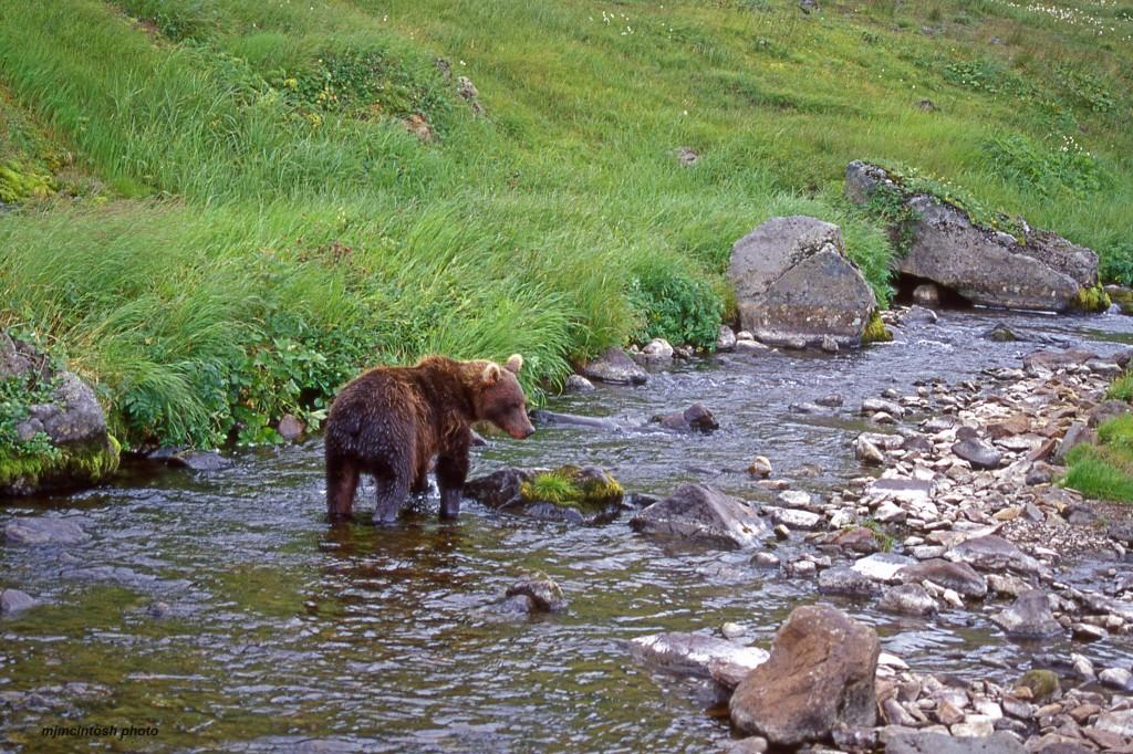 bear Russia,1998,Nikon F90X,img018