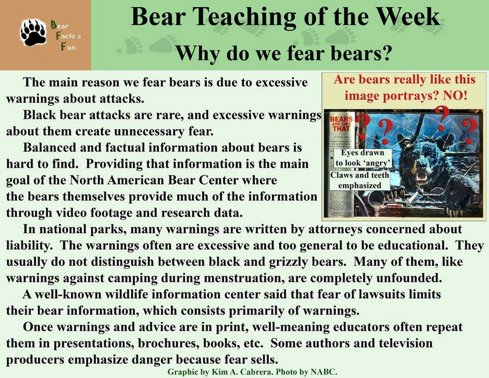bear teachings a