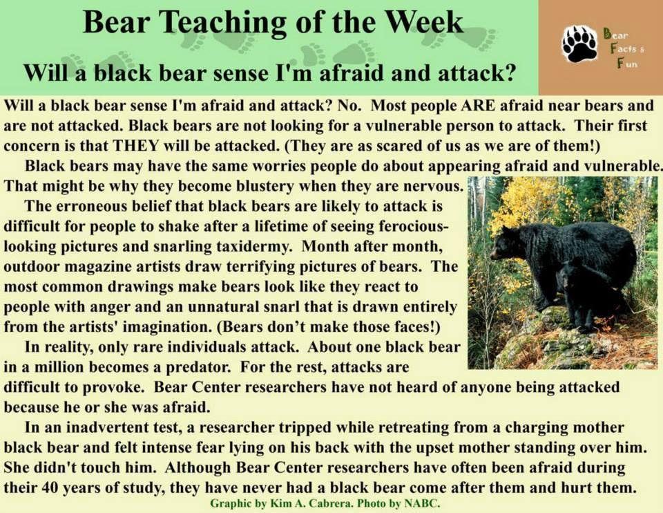 bear teachings c