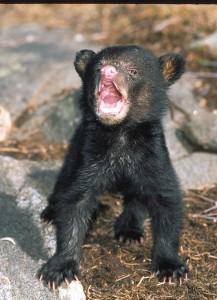 cub,Kya,-April-99,F90X,Sensia10