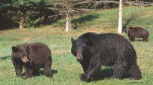 cubs(brown),mom,Sept-1999,web