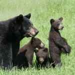 momma,cubs,crop,web,June-2014,D806028