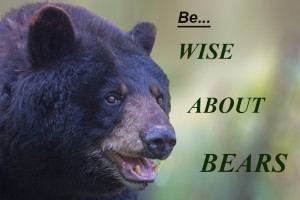 WiseAboutBear,text,Aug-29-2013,D80_7591