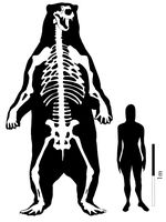 biggest-bear-ever-found-diagram_31977_200x150
