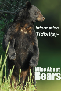 Information-Tidbits--A---Wise-About-Bears