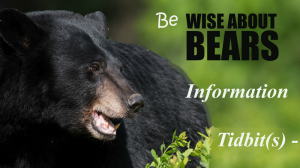 Information-Tidbits--B--Wise-About-Bears