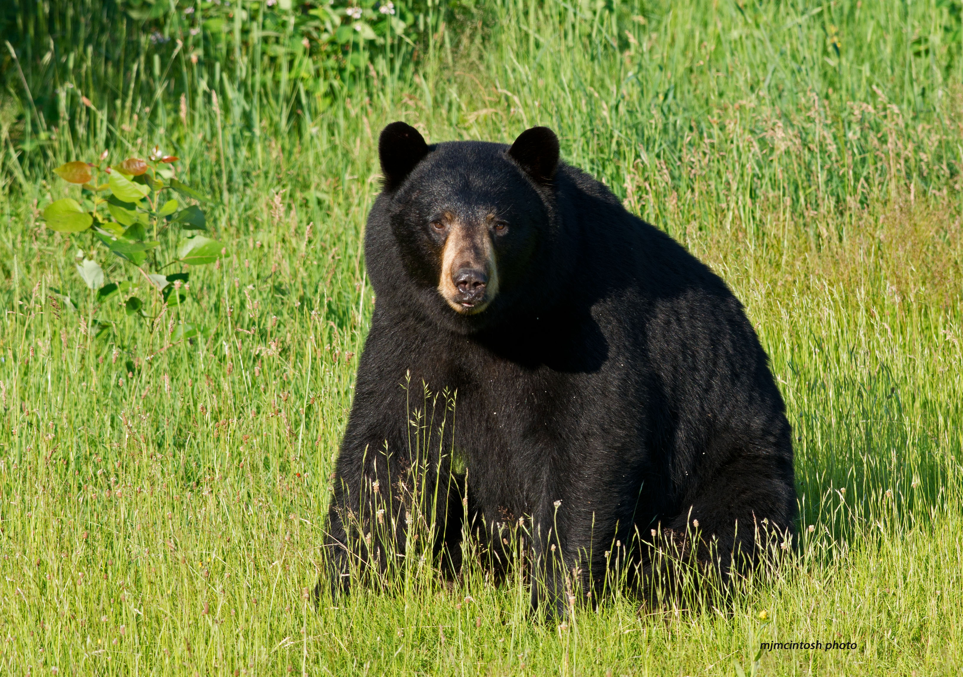Why Do People Fear Bears? | Wise About Bears - photo#23