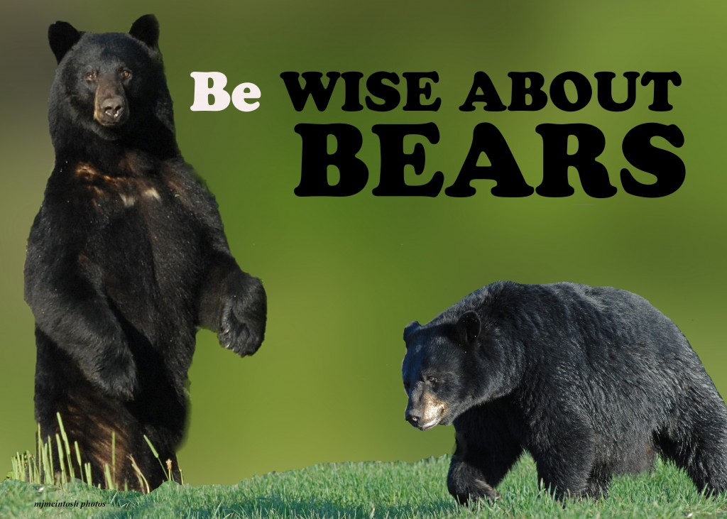 wiseaboutbears,TEXT,composition5x7,D200,80,200,2010,076